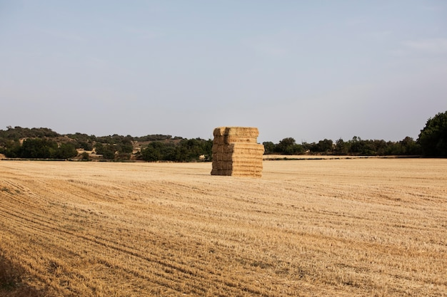 Grande botte de foin au milieu du champ à la campagne