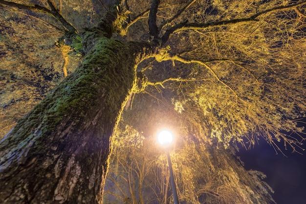 Grande branche de saule avec ampoule brille la nuit