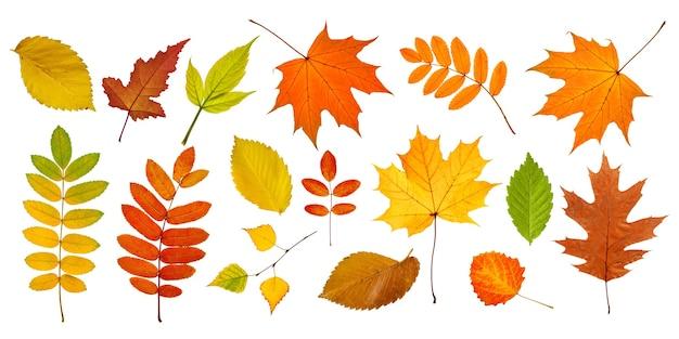Grande collection de feuilles d'automne isolées sur blanc