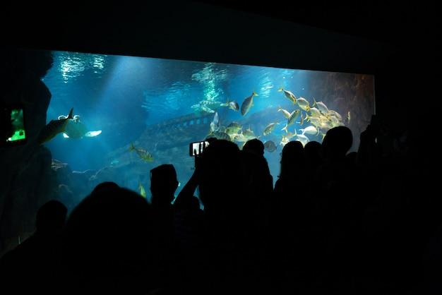 Une grande compagnie de personnes est venue faire le tour de l'aquarium. les touristes prennent des photos de poissons dans un grand aquarium.