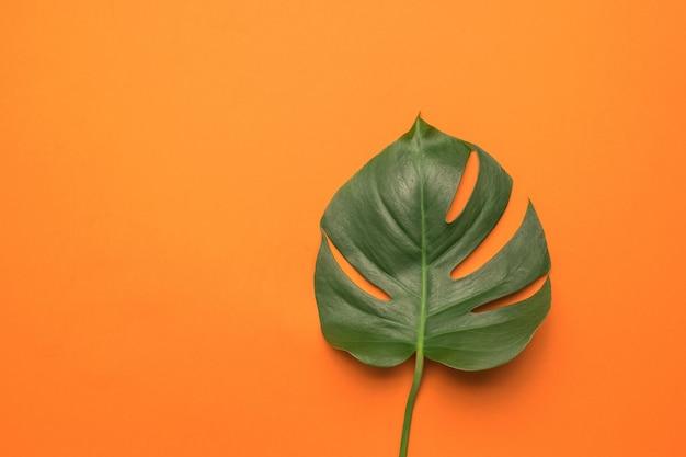 Une grande feuille de monstera sur fond orange vif.