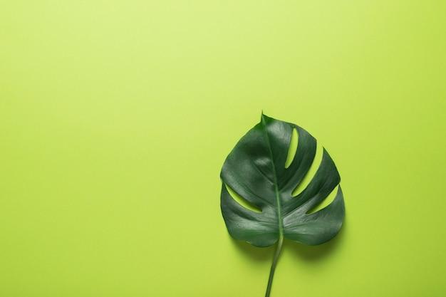 Une grande feuille de monstera verte sur fond vert. conception minimaliste.