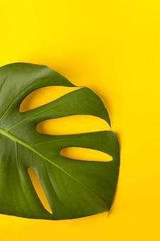 Grande feuille de monstera verte sur papier jaune. palette de feuilles vertes et tropicales monstera dans le style beaux-arts. fond jaune.