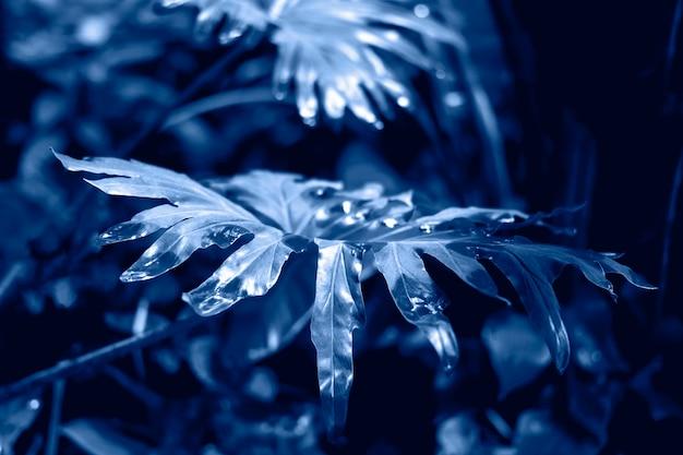 Grande feuille tropicale dans la forêt tropicale avec des gouttes de pluie dans la jungle f