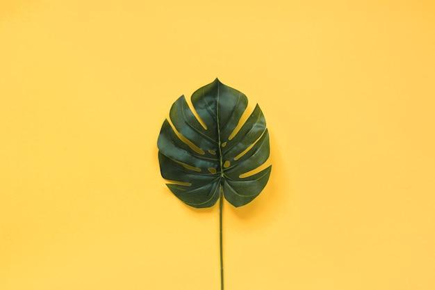 Grande feuille verte tropicale