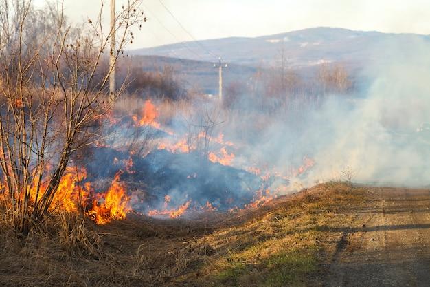 Une grande flamme de feu détruit l'herbe sèche et les branches d'arbres le long de la route.