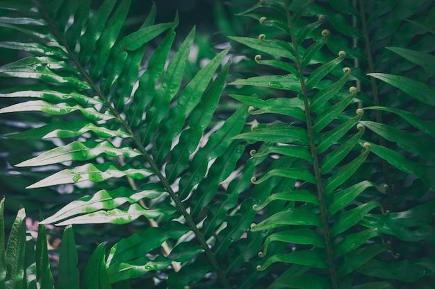 Grande fougère dans la forêt tropicale, image de fond naturel