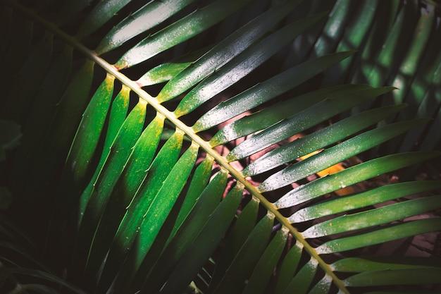 Grande fougère sombre dans la forêt tropicale, image de fond naturel