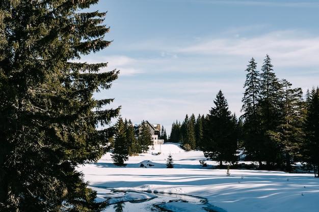 Une grande maison en hiver parmi la neige dans une forêt de conifères parmi les arbres contre le bleu