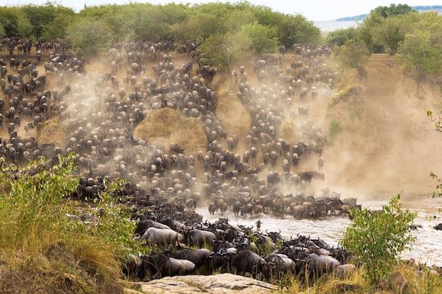 La grande migration à la hauteur afrique kenya