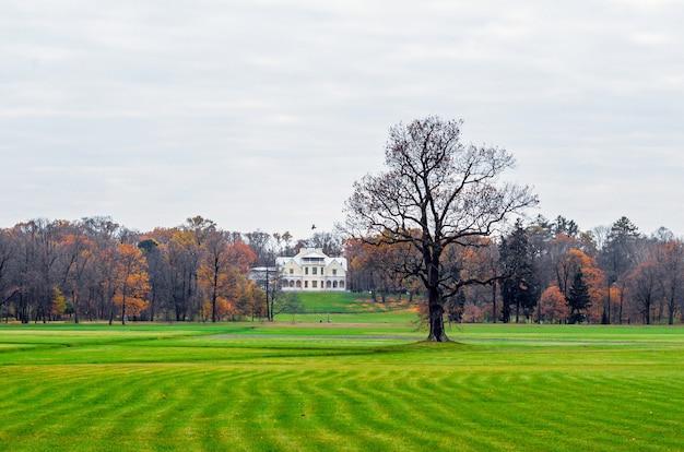 Grande pelouse verte texture arbre solitaire et maison loin.