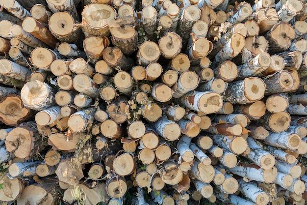 Une grande pile d'arbres abattus à l'orée de la forêt