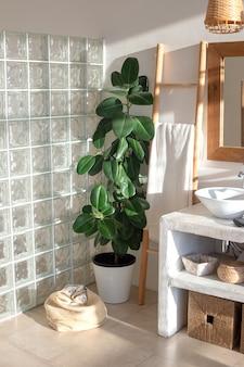 Grande plante de ficus dans un intérieur moderne et élégant d'une salle de bains lumineuse et ensoleillée