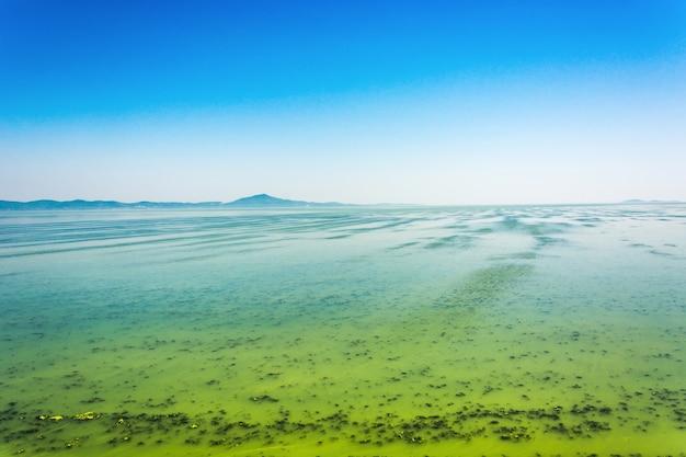 Grande rivière ukrainienne dnepr couverte par cyanobacterias à la suite d'étés chauds