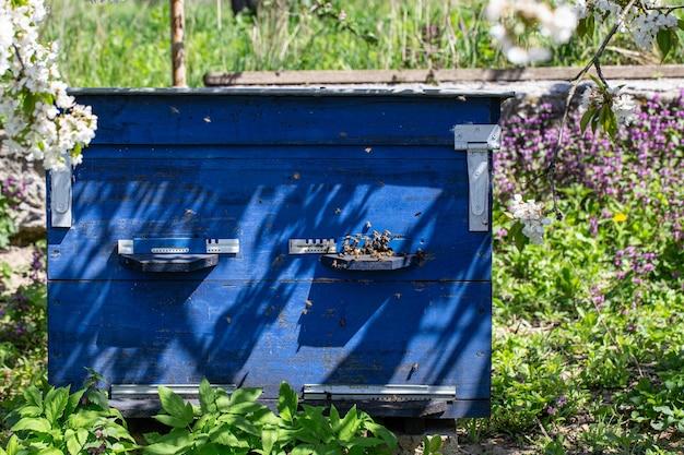 Grande ruche en bois avec des abeilles dans le rucher au printemps