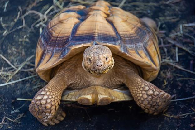 Grande tortue dans un zoo