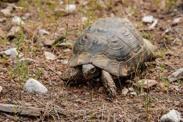 Grande tortue marchant sur le sol dans le parc