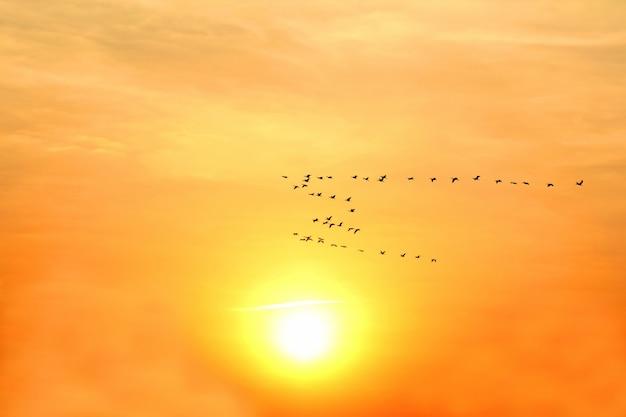 Grande volée d'oiseaux volant à l'aube solaire