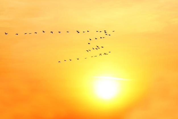 Grande volée d'oiseaux volant sur le fond de l'aube solaire. nature et paysages incroyables