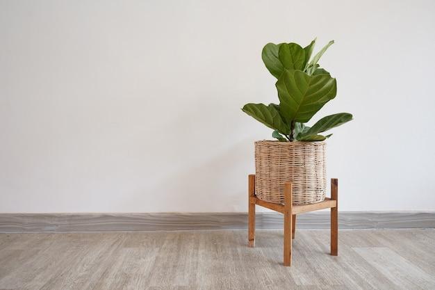 Grandes feuilles plante verte dans un panier en osier tissé sur plancher en bois avec mur blanc et espace pour le texte