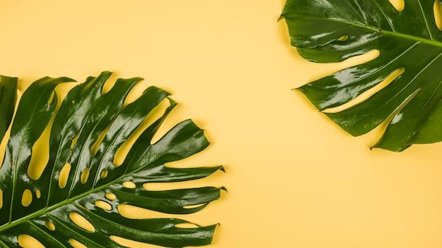 Grandes feuilles de plantes vertes
