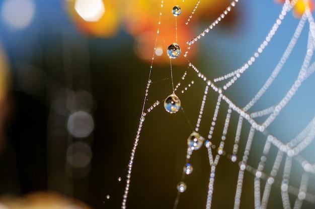 Grandes gouttes de rosée avec réflexion sur close-up de toile d'araignée