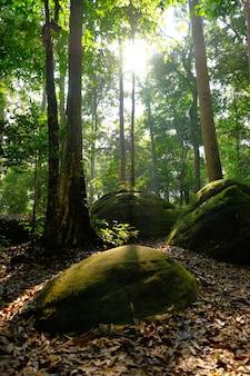 Grandes pierres dans la forêt