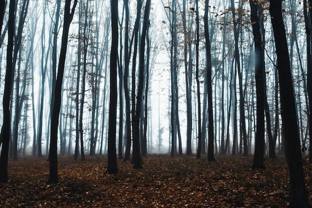 Grands arbres dans le brouillard en forêt