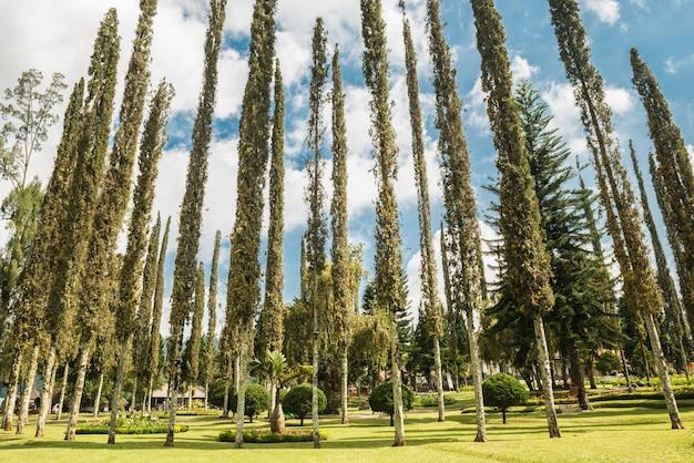 Les grands arbres du parc s'élèvent vers le ciel.