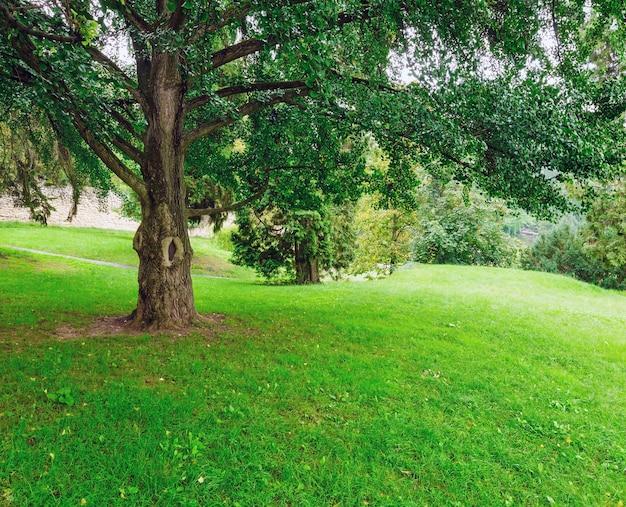 Grands arbres étalés dans le parc d'été