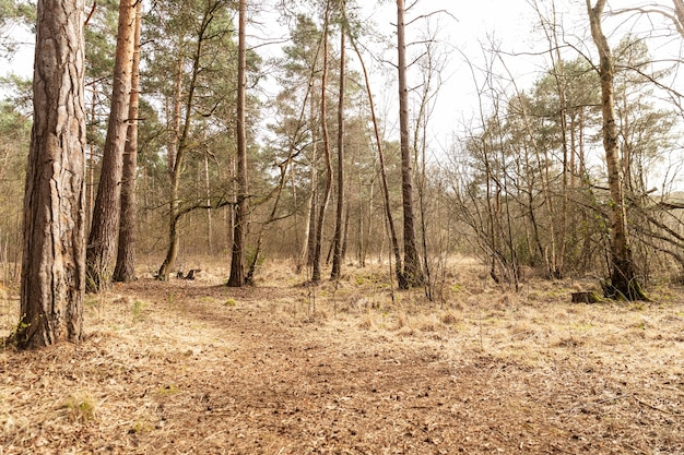 Grands arbres en forêt à la lumière du jour