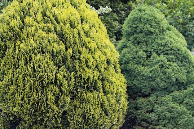 De grands buissons verts forment un fond vert de feuillage