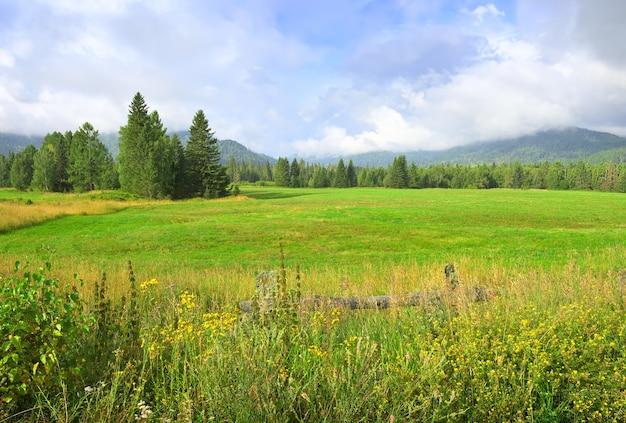 Grands sapins parmi les fleurs sauvages et les montagnes verdoyantes en été avec un ciel bleu nuageux. sibérie, russie