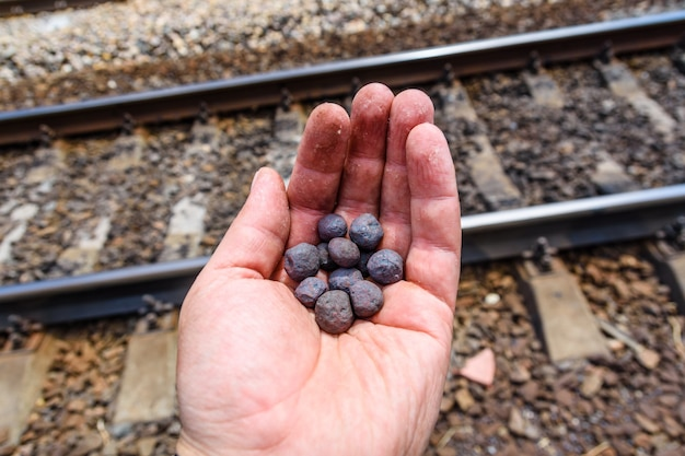 Granulés de taconite de minerai de fer dans une main de travailleur