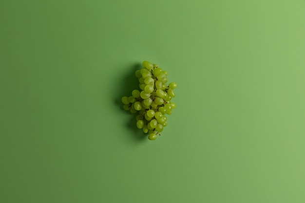 Grappe de délicieux raisin muscat vert pour faire du vin ou du jus. fruits riches très appréciés de saison récoltés. prise de vue monochrome. mise au point sélective. espace pour votre texte. une alimentation saine, un concept alimentaire