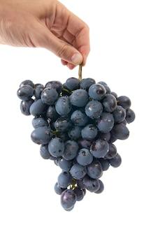 Grappe de raisin rouge dans la main sur blanc