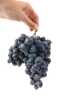 Grappe de raisin rouge dans la main isolé sur blanc