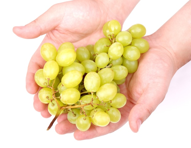 Grappe d'un raisin vert dans les mains de l'homme