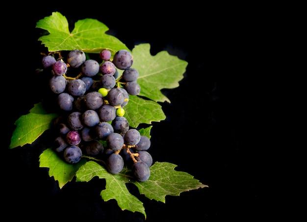 Grappe de raisins frais et feuilles de vigne isolé sur fond noir