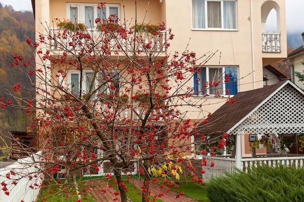 Grappes de baies de viorne rouge avec des gouttes de pluie à la fin de la saison estivale fruits de saison