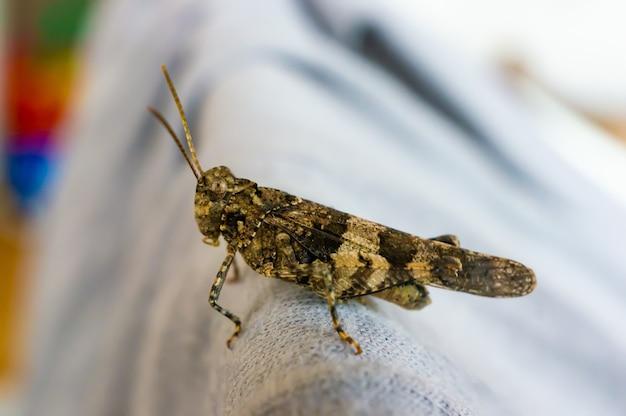 Grasshopper sur un canapé