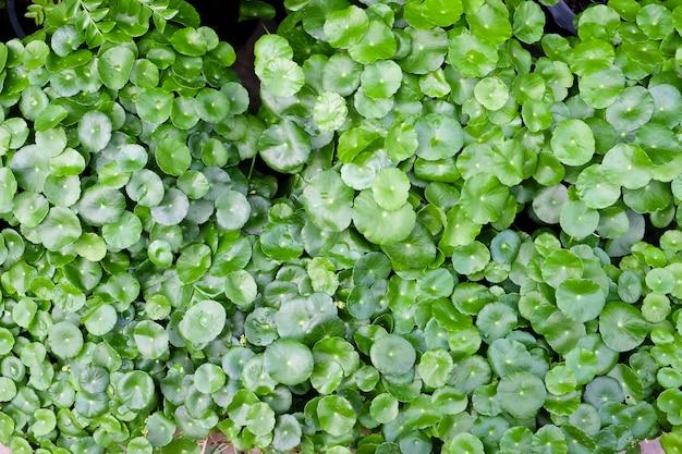 Green laisser après l'arrosage, avec des gouttes d'eau douce