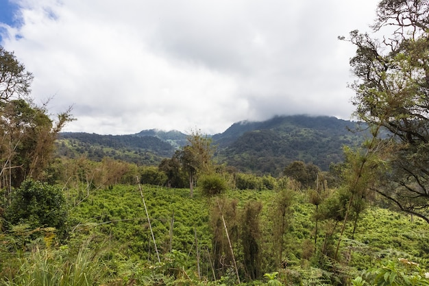 Green park aberdare kenya afrique