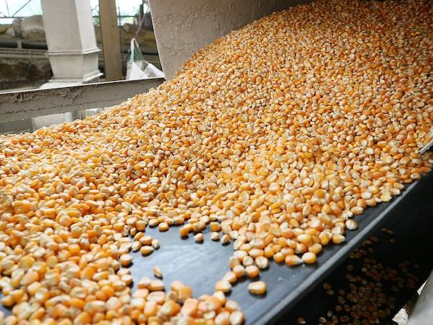 Grenier moderne, complexe de séchage du maïs