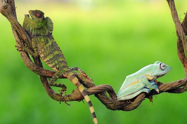 Une grenouille d'arbre sur une feuille une grenouille d'arbre