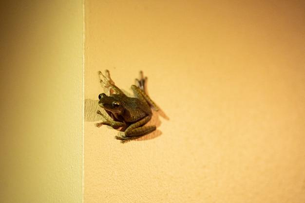 La grenouille est assise sur le mur.