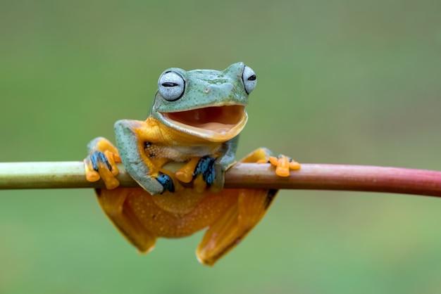Une grenouille avec un visage souriant sur une branche d'arbre