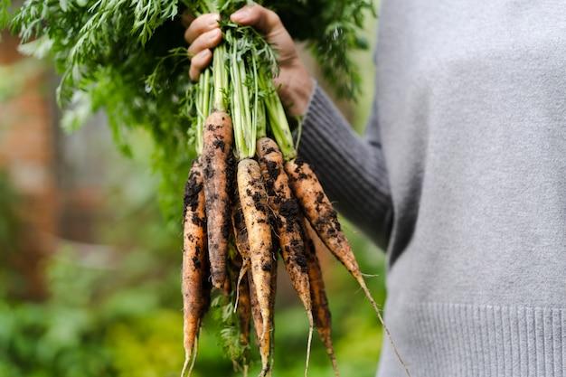 Gros bouquet de carottes dans une main féminine