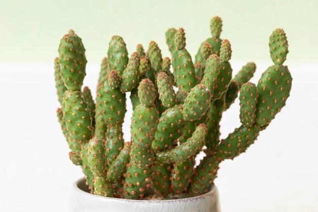 Gros cactus dans un pot en céramique sur fond blanc.