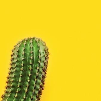 Un gros cactus succulent vert sur jaune. cactus épineux.